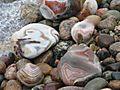 Rocks 016