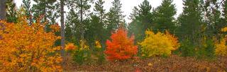 Fall-2008-018-(2)