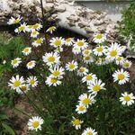 Flowers_1014