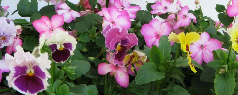 Flowers_1018