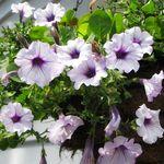 Flowers_1015