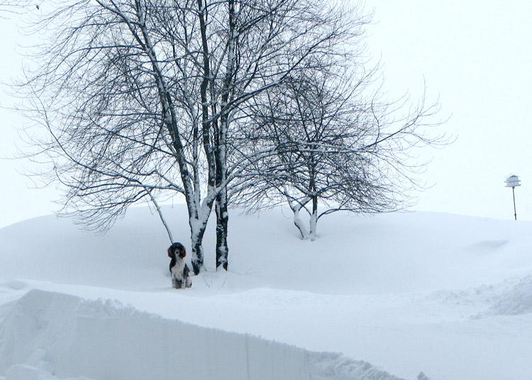 Jan13_snow_1253