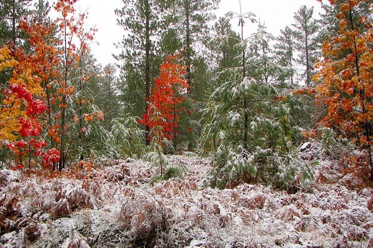 October_snow_1133