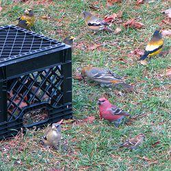 Birds-crate_1154