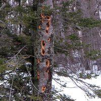 Apr24_tree_1435