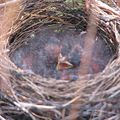 2013july-babybird
