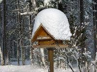 13_snow_1264
