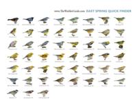 East-Spring-Quick-Finder