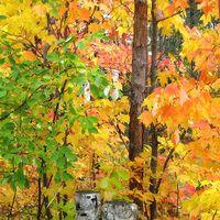 Fallcolor_0431