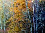 Autumn_2