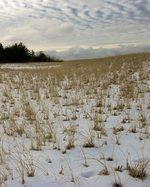 Snow_sand_grass